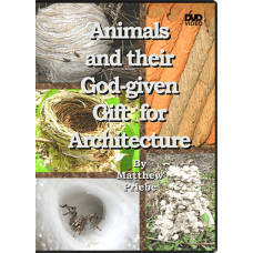 Animals and their God Given Gift for Architecture